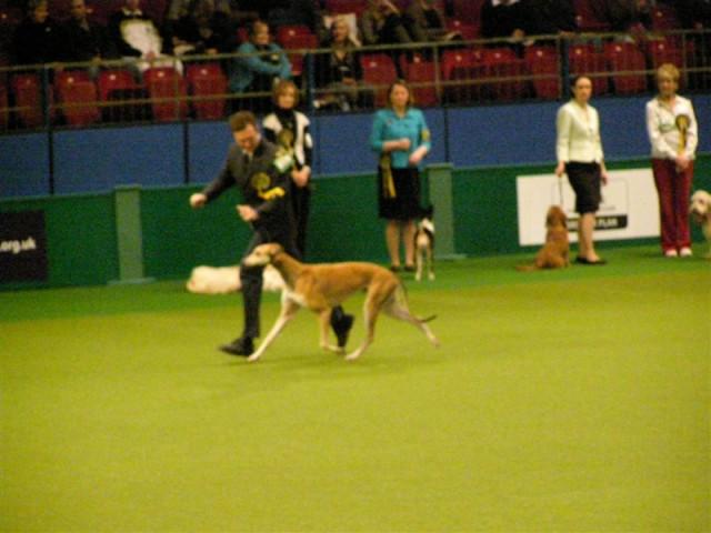 Crufts 2009